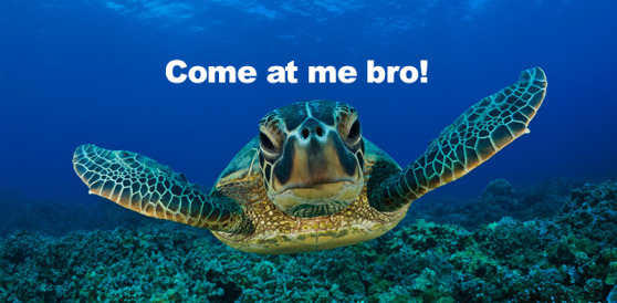turtle - come at me bro